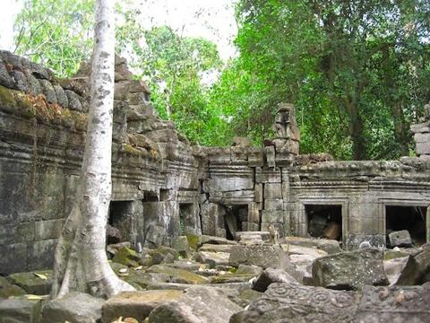 ve-dep-ky-quan-den-angkor-wat-14-cay-co-hoang